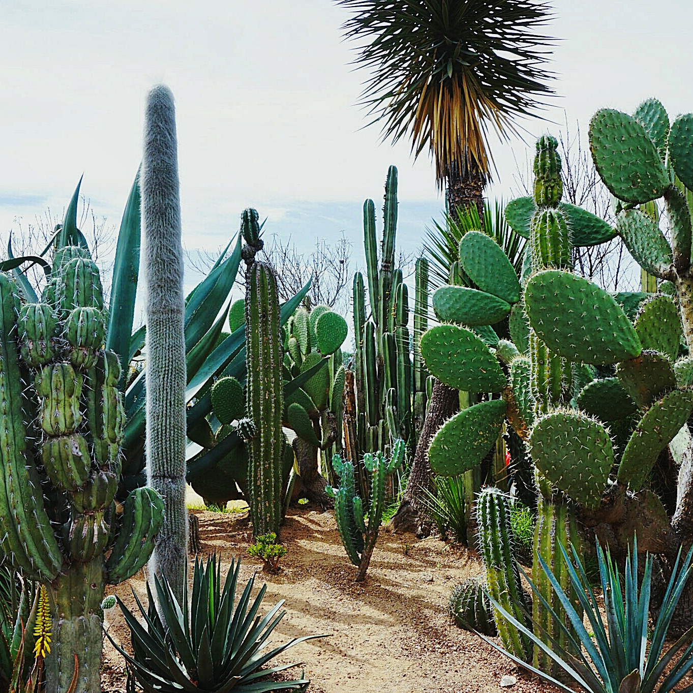 travel to mexico, cactus, turning point blog, mexico city, lifestyle, travel