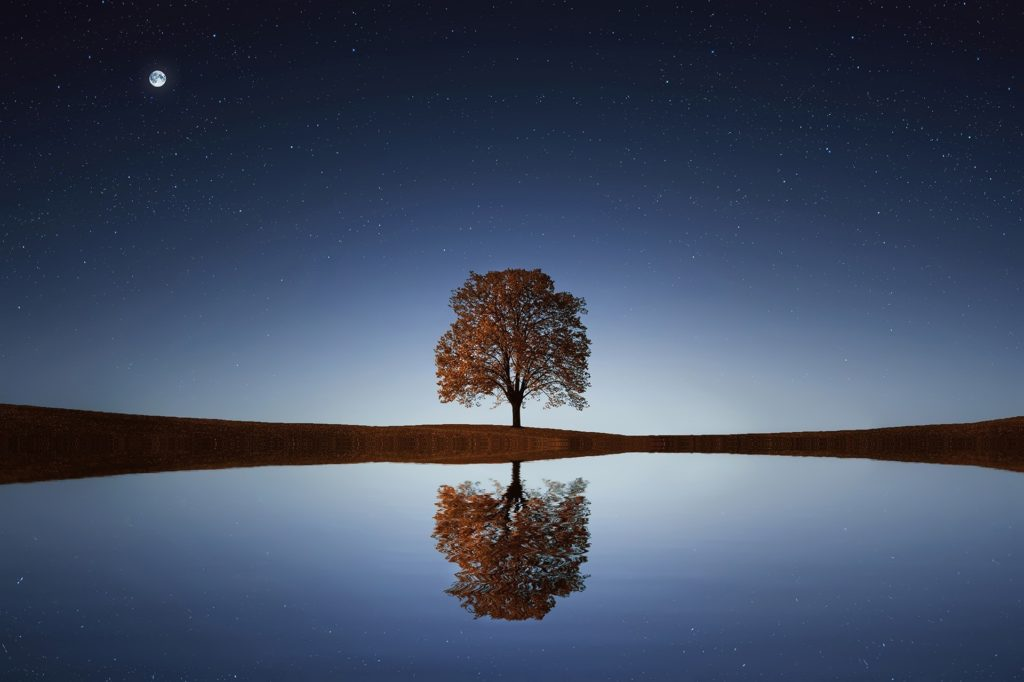 tree in the middle of the scenery reflecting into water under the stars and full moonlight