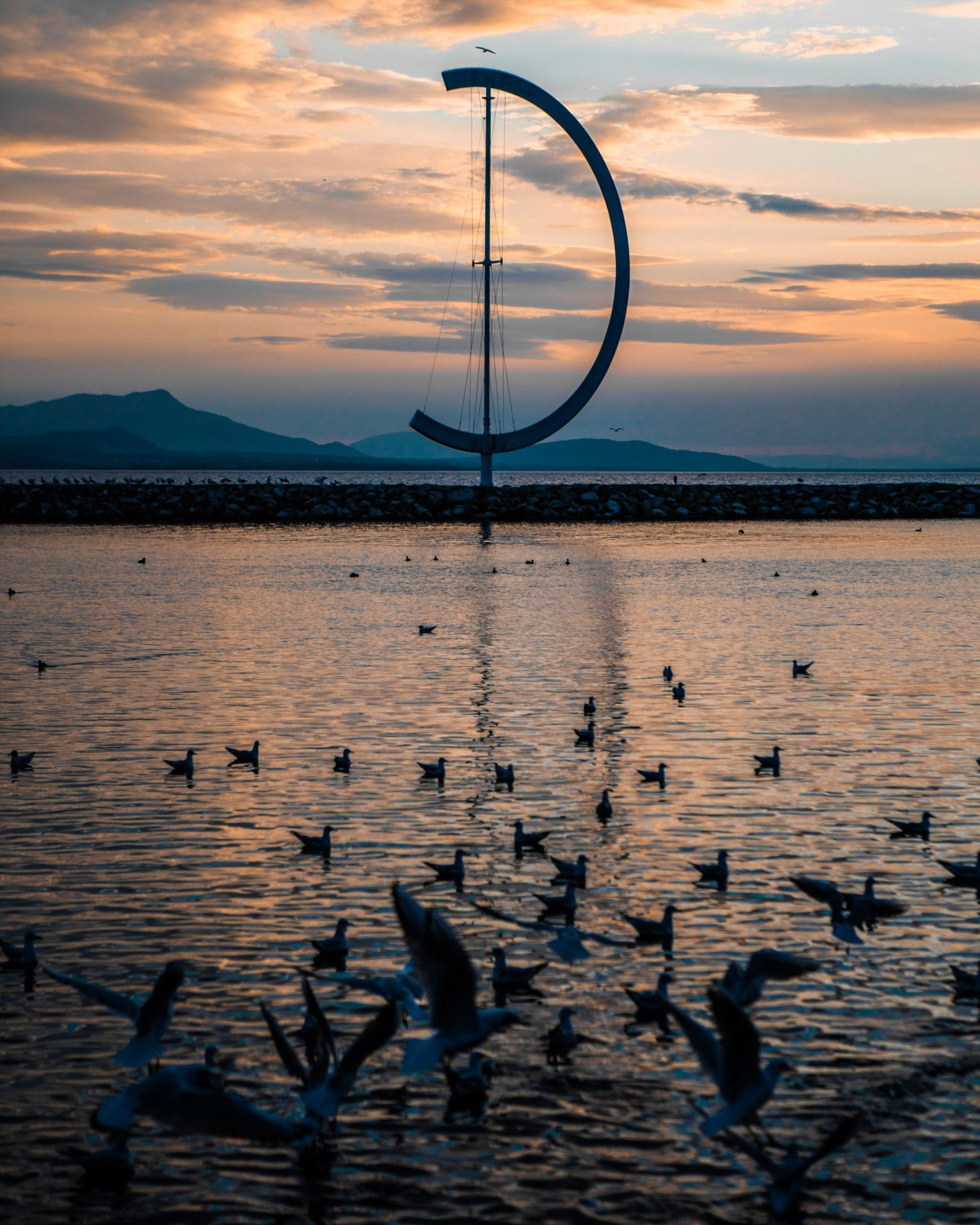 birds on water in lac léman, ouchy, lausanne, switzerland